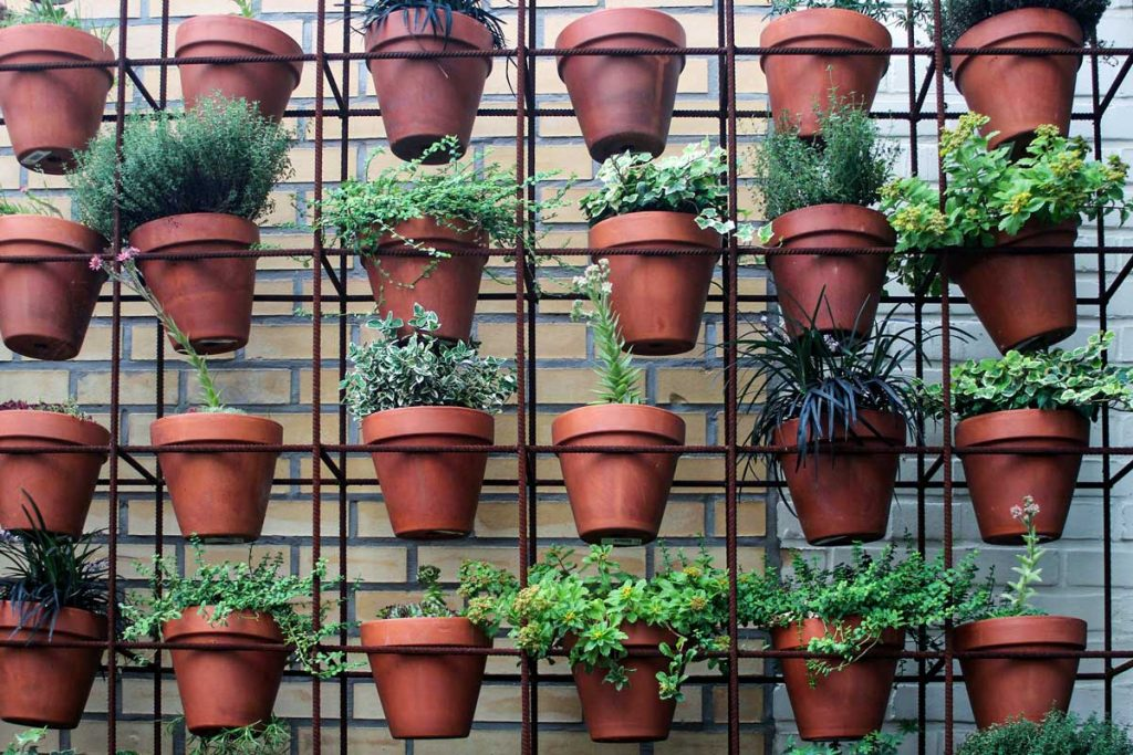 Plants growing in pots on a metal frame.